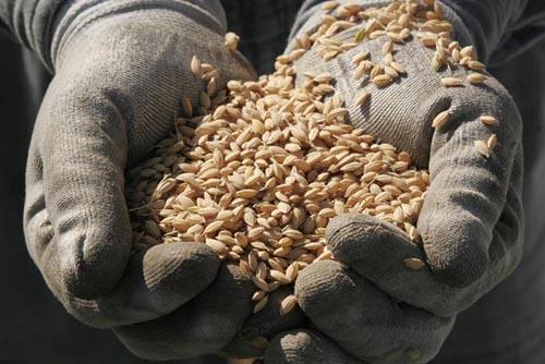 これが『特別栽培米あきたこまち』