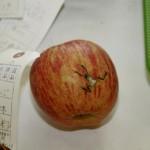 カエルリンゴ!